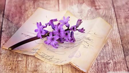 fresh_hyacinth_on_table-wallpaper-1280x720